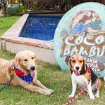 Coco Bambu Sul: almoço petfriendly em Fortaleza