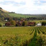 Introdução ao vinho inglês